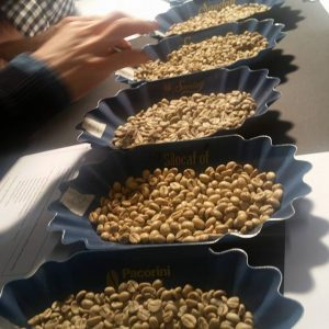 Green Coffee Course (1)